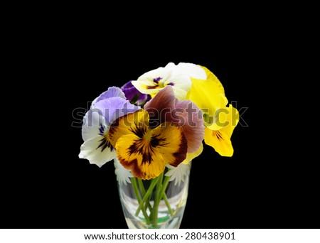 Flowers Viola tricolor (Heartsease) - stock photo