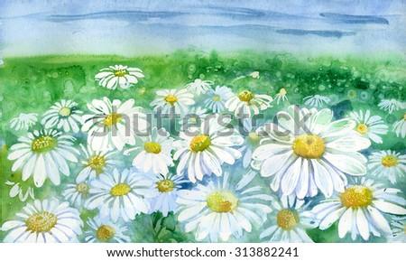flowers , watercolor ,  botany, chamomile  - stock photo
