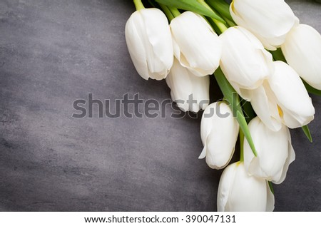 Flowers white tulips on the grey background. - stock photo