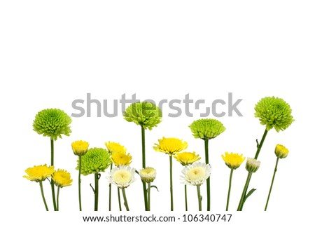 Flowers white, yellow, green isolated on a white background