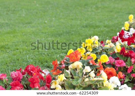 Flowers with a blurred lawn as background and place for text - stock photo