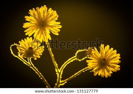 Flowers with black background - stock photo