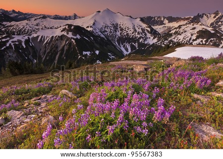 Flowers with Mountain at sunrise - stock photo