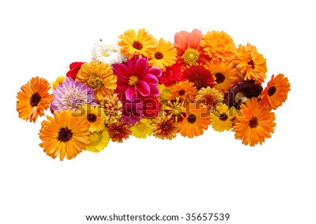 Flowers with petals of various colours on a white background - stock photo