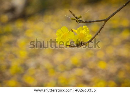 Yellow flowers on tree spring nature stock photo 751054297 flowers yellow flowersgolden tree yellow pui scientific name tabebuia chrysantha mightylinksfo Gallery