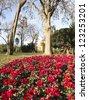 Flowery Corner Ciutadella Park. Barcelona, Catalonia, Spain. - stock photo