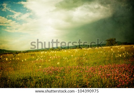 Flowery meadow before a storm, old grunge vintage background - stock photo