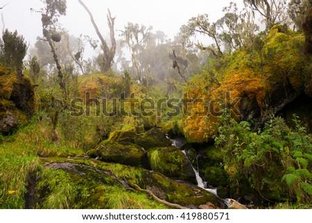 flowing water in ruwenzori mountains, uganda - stock photo