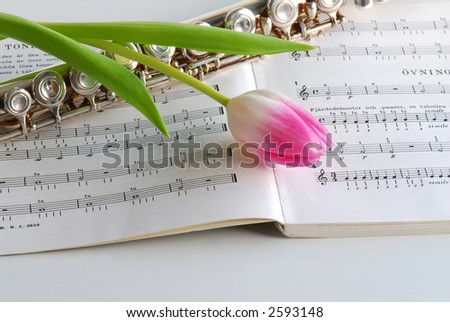 flue notes and pink tulip - stock photo