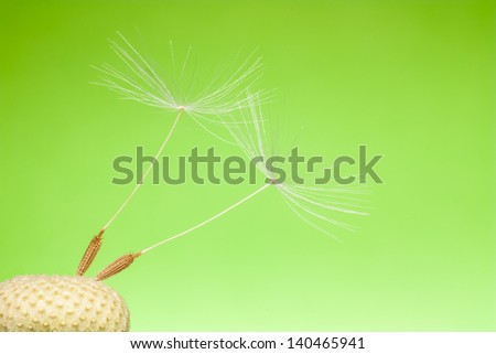 fluff dandelion on a green background - stock photo