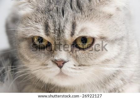 Fluffy cat - stock photo