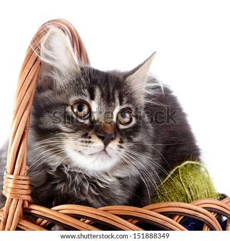 Fluffy cat in a wattled basket with woolen balls. Striped not purebred kitten. Kitten on a white background. Small predator. Small cat. - stock photo