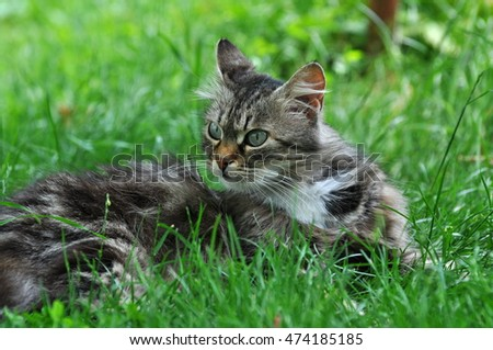 Fluffy cat in the grass