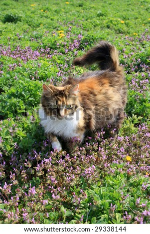 fluffy cat on the flowers