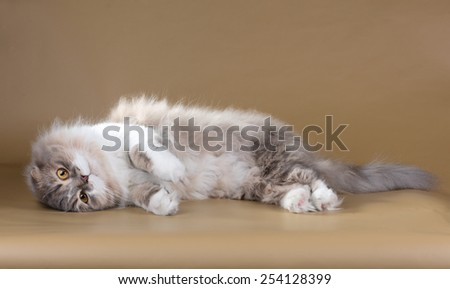 Fluffy cat playing lying on its side - stock photo