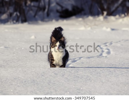 Fluffy cat running on the snow - stock photo