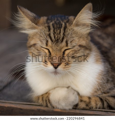 Fluffy cat with closed eyes relaxing on wooden floor
