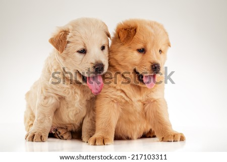 Fluffy Chow-chow puppy, isolated over white background - stock photo
