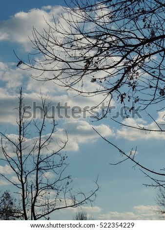 Fluffy clouds framed by tree branches