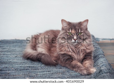 Fluffy cute cat lying on the blue carpet - stock photo