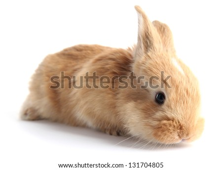 Fluffy foxy rabbit isolated on white - stock photo