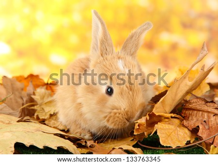 Fluffy foxy rabbit on leaves in park - stock photo
