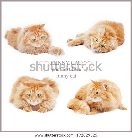 fluffy ginger cat isolated on white, collage