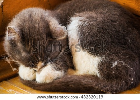 Fluffy gray and white cat curled up asleep in the corner of a wooden veranda of village house