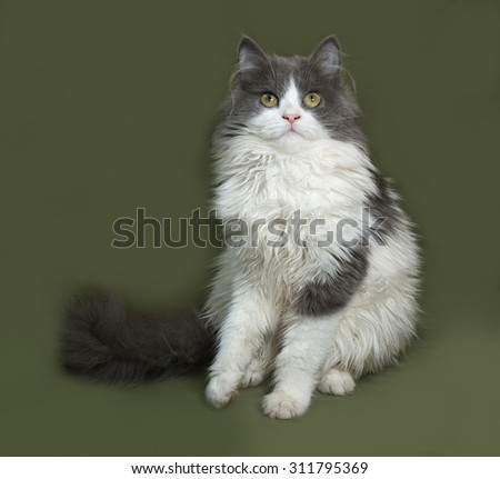Fluffy gray and white kitten sitting on green background