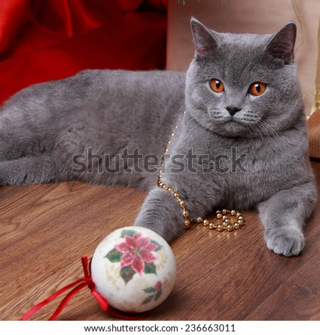 Fluffy gray cat playing with the Christmas tree decorations on holiday theme/Image of british cat with yellow eyes - stock photo
