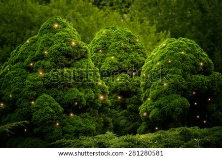 fluffy green bushes with fireflies in the park - stock photo