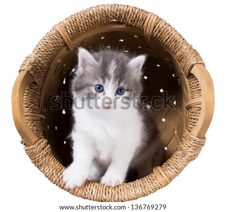 Fluffy kitten in a basket  isolated on a white background - stock photo