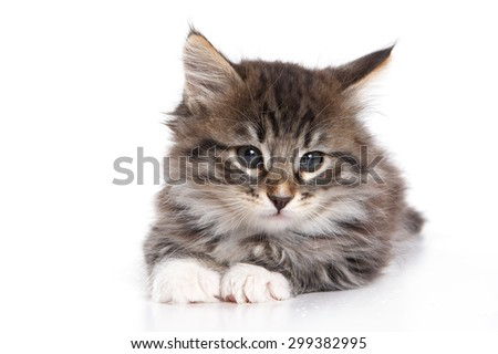 Fluffy kitten lying down and looking at the camera (isolated on white) - stock photo