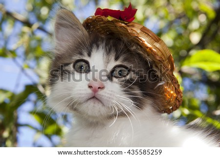 Fluffy kitten on the tree in the hat