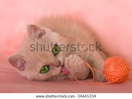 fluffy kitten playing with a ball threads - stock photo
