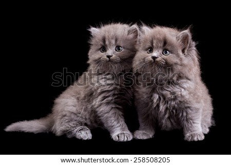 Fluffy kittens isolated on black background - stock photo