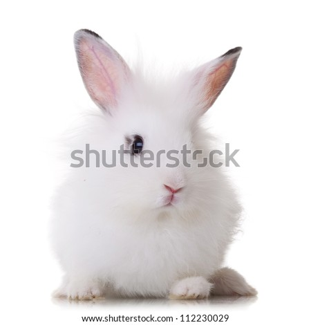 fluffy little white rabbit lying on a white background - stock photo
