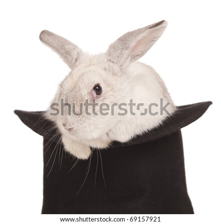 Fluffy long-eared rabbit in top hat over white background - stock photo