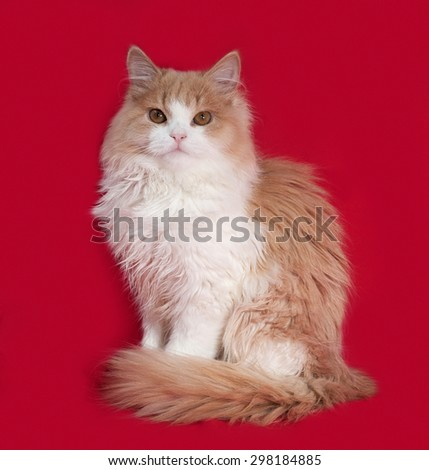 Fluffy red and white kitten sitting on red background