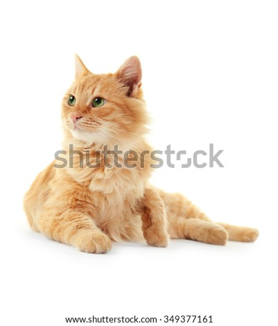 Fluffy red cat cleans itself isolated on white background - stock photo