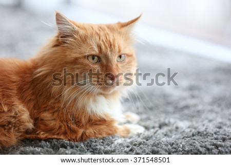 Fluffy red cat lying on a carpet - stock photo