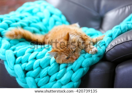 Fluffy red cat lying on a sofa - stock photo
