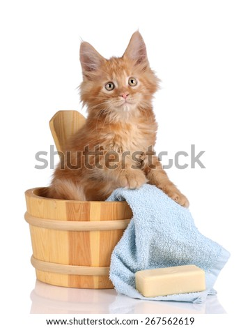 Fluffy red kitten sitting in a wooden bath, preparing for washing - stock photo