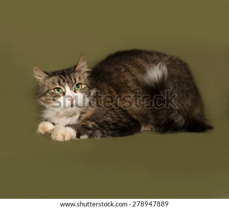 Fluffy tabby and white cat standing on green background - stock photo