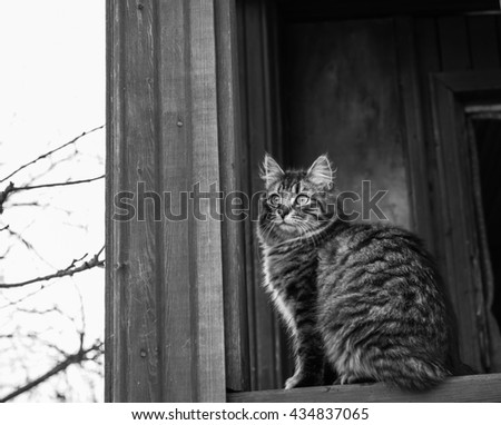 Fluffy Tabby cat sitting outdoor at the terrace. Toned image in retro style. Black and white photo - stock photo