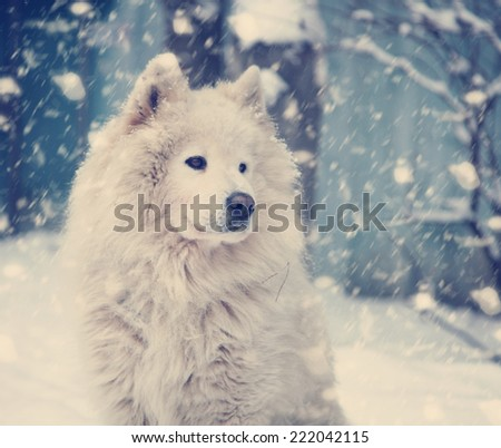 fluffy white dog under the falling snow in winter, with retro instagram effect - stock photo