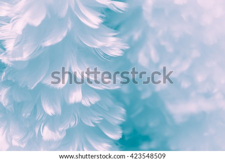 Fluffy white feather - Foam Crystal blue and Oxygenated Violet design background - soft focus - Fashion Color Trends Fall Winter 2016 2017 Set 2 - and Immature Blue color of Spring Summer 2017 - stock photo