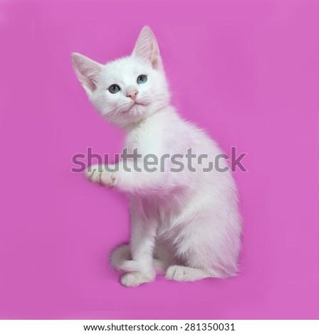 Fluffy white kitten sitting on pink background - stock photo