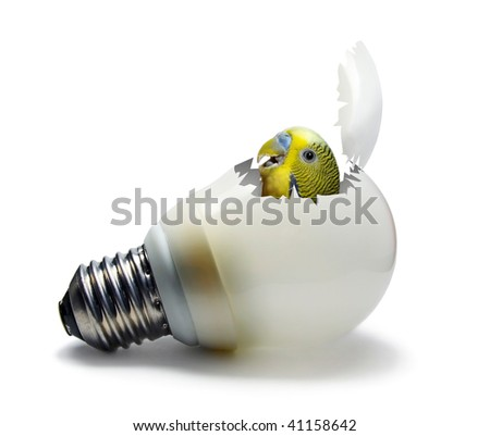 Fluorescent lamp looking like egg with bird inside concept