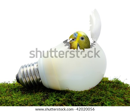 Fluorescent lamp with parrot inside - stock photo